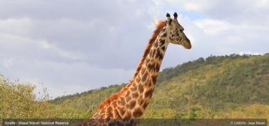 giraffe-in-masai-marah-reserve