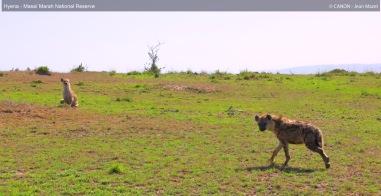 hyena-in-masai-marah-reserve